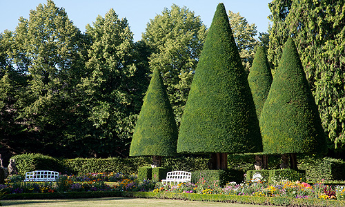 Picture: Trimmed yews in the South Garden